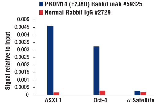 Chromatin immunoprecipitations were performed with cross-linked chromatin from NCCIT cells and either PRDM14 (E2J8Q) Rabbit mAb #59325 or Normal Rabbit IgG #2729 using SimpleChIP<sup>®</sup> Plus Enzymatic Chromatin IP Kit (Magnetic Beads) #9005. The enriched DNA was quantified by real-time PCR using SimpleChIP<sup>®</sup> Human ASXL1 Upstream Primers #34755, SimpleChIP® Human Oct-4 Promoter Primers #4641, and SimpleChIP<sup>®</sup> Human α Satellite Repeat Primers #4486. The amount of immunoprecipitated DNA in each sample is represented as signal relative to the total amount of input chromatin, which is equivalent to one.