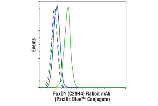 Flow cytometric analysis of Jurkat cells (blue) and IGROV-1 cells (green) using FoxO1 (C29H4) Rabbit mAb (Pacific Blue™ Conjugate) (solid lines) or a concentration-matched Rabbit (DA1E) mAb IgG XP<sup>®</sup> Isotype Control (Pacific Blue™ Conjugate) #9078 (dashed lines).
