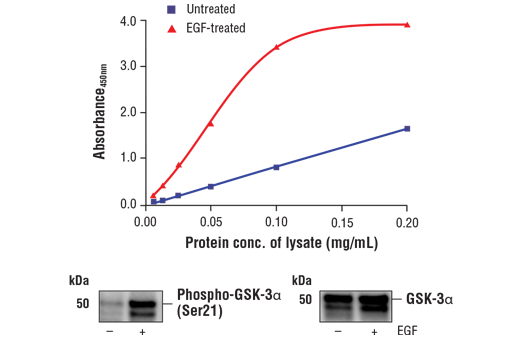 ELISA Kit Negative Regulation of Glycogen Biosynthetic Process