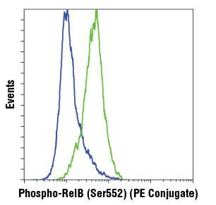 Monoclonal Antibody - Phospho-RelB (Ser552) (D41B9) XP®Rabbit mAb (PE Conjugate), UniProt ID Q01201, Entrez ID 5971 #13567, Relb