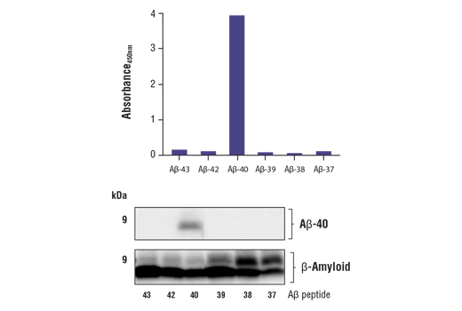 Image 1: FastScan™ β-Amyloid (1-40 Specific) ELISA Kit