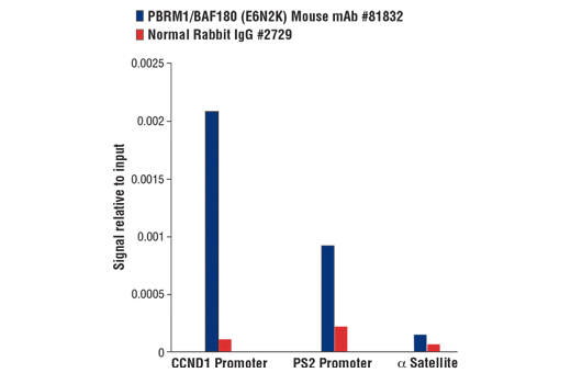 Chromatin immunoprecipitations were performed with cross-linked chromatin from MCF7 cells grown in phenol red free medium and 5% charcoal stripped FBS for 4 d, followed by treatment with β-estradiol (10 nM, 45 min) and either PBRM1/BAF180 (E6N2K) Mouse mAb or Normal Rabbit IgG #2729 using SimpleChIP<sup>®</sup> Plus Enzymatic Chromatin IP Kit (Magnetic Beads) #9005. The enriched DNA was quantified by real-time PCR using SimpleChIP<sup>®</sup> Human CCND1 Promoter Primers #12531, SimpleChIP<sup>®</sup> Human pS2 Promoter Primers #9702, and SimpleChIP<sup>®</sup> Human α Satellite Repeat Primers #4486. The amount of immunoprecipitated DNA in each sample is represented as signal relative to the total amount of input chromatin, which is equivalent to one.