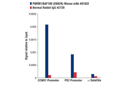 Monoclonal Antibody - PBRM1/BAF180 (E6N2K) Mouse mAb - Chromatin IP, Western Blotting, UniProt ID Q86U86, Entrez ID 55193 #81832 - #81832