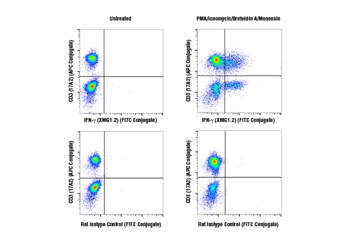 Flow cytometric analysis of live mouse splenocytes, untreated (left column) or treated with 1X Cell Stimulation Cocktail (with protein transport inhibitors) (500X) (right column), using IFN-γ (XMG1.2) Rat mAb (FITC Conjugate) (top row) or concentration-matched Rat Isotype Control (FITC Conjugate) (bottom row), and co-stained with CD3 (17A2) Rat mAb (APC Conjugate) #24265.