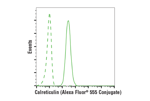 Flow Cytometry Image 1: Calreticulin (D3E6) XP® Rabbit mAb (Alexa Fluor® 555 Conjugate)