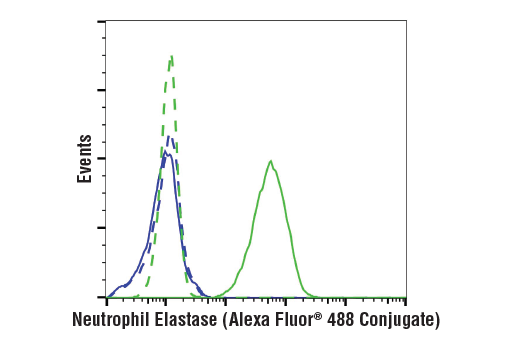 Flow cytometric analysis of Jurkat cells (blue) and U-937 cells (green) using Neutrophil Elastase (E9C9L) XP<sup>®</sup> Rabbit mAb (Alexa Fluor<sup>®</sup> 488 Conjugate) (solid lines) or concentration-matched Rabbit (DA1E) mAb IgG XP<sup>®</sup> Isotype Control (Alexa Fluor<sup>®</sup> 488 Conjugate) #2975 (dashed lines).