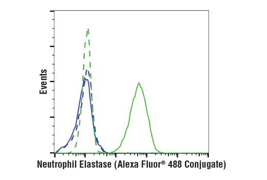 Monoclonal Antibody - Neutrophil Elastase (E9C9L) XP® Rabbit mAb (Alexa Fluor® 488 Conjugate), UniProt ID P08246, Entrez ID 1991 #16900, Elane