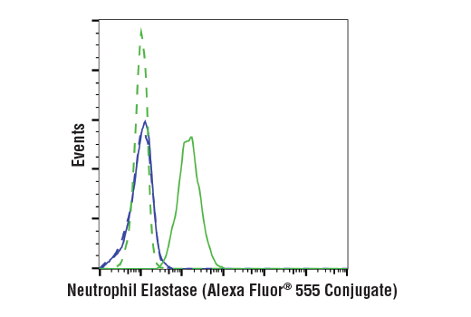 Flow cytometric analysis of Jurkat cells (blue) and U-937 cells (green) using Neutrophil Elastase (E9C9L) XP<sup>®</sup> Rabbit mAb (Alexa Fluor<sup>®</sup> 555 Conjugate) (solid lines) or concentration-matched Rabbit (DA1E) mAb IgG XP<sup>®</sup> Isotype Control (Alexa Fluor<sup>®</sup> 555 Conjugate) #3969 (dashed lines).