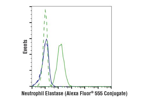 Monoclonal Antibody - Neutrophil Elastase (E9C9L) XP® Rabbit mAb (Alexa Fluor® 555 Conjugate), UniProt ID P08246, Entrez ID 1991 #39680