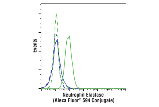 Flow cytometric analysis of Jurkat cells (blue) and U-937 cells (green) using Neutrophil Elastase (E9C9L) XP<sup>®</sup> Rabbit mAb (Alexa Fluor<sup>®</sup> 594 Conjugate) (solid lines) or concentration-matched Rabbit (DA1E) mAb IgG XP<sup>®</sup> Isotype Control (Alexa Fluor<sup>®</sup> 594 Conjugate) #8760 (dashed lines).