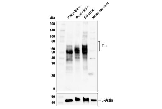 Polyclonal Antibody Regulation of Intracellular Transport