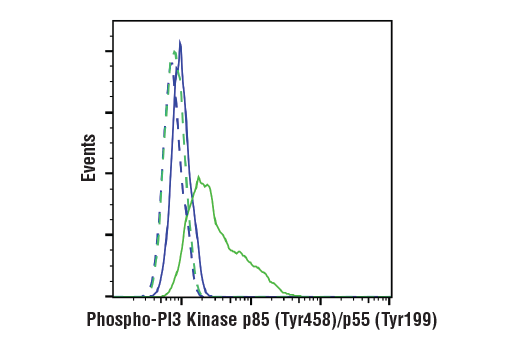 Monoclonal Antibody Immunoprecipitation Phosphatidylinositol Biosynthetic Process - count 20