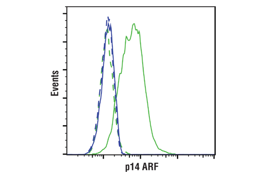 Flow cytometric analysis of SK-OV-3 cells (blue) and HeLa cells (green) using p14 ARF (E3X6D) Rabbit mAb (solid lines) or a concentration-matched Rabbit (DA1E) mAb IgG XP<sup>®</sup> Isotype Control #3900 (dashed lines). Anti-rabbit IgG (H+L), F(ab')<sub>2</sub> Fragment (Alexa Fluor<sup>®</sup> 488 Conjugate) #4412 was used as a secondary antibody.