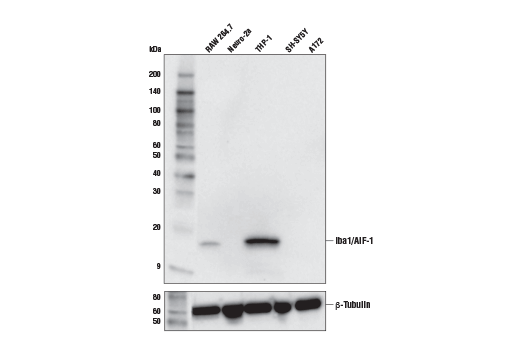 Image 65: Mouse Microglia Marker IF Antibody Sampler Kit