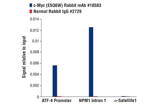Chromatin Immunoprecipitation Image 1: c-Myc (E5Q6W) Rabbit mAb