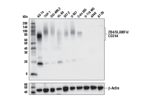 Image 26: Human Exhausted T Cell Antibody Sampler Kit