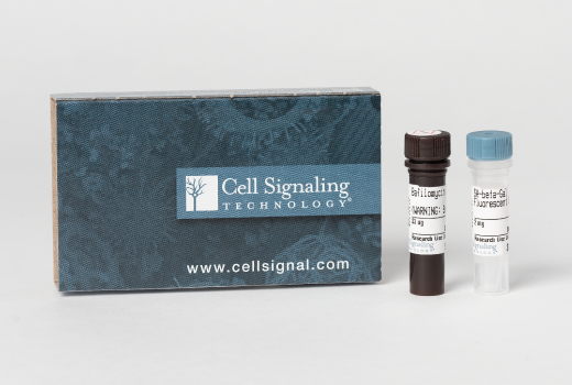 Image 1: Senescence β-Galactosidase Activity Assay Kit (Fluorescence, Flow Cytometry)