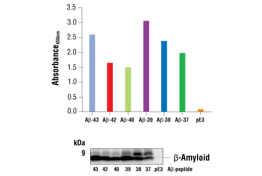 Image 1: FastScan™ β-Amyloid ELISA Kit