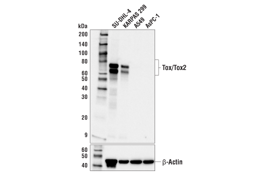 Image 3: Human Exhausted T Cell Antibody Sampler Kit