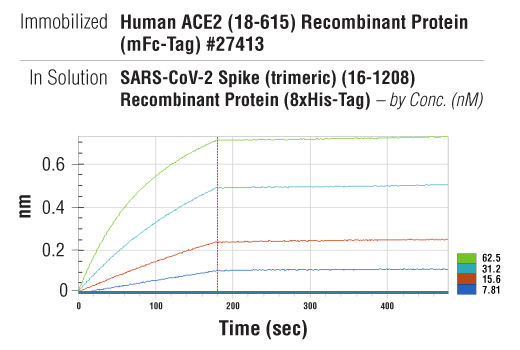 Image 3: SARS-CoV-2 Spike (trimeric) (16-1208) Recombinant Protein (8xHis-Tag)