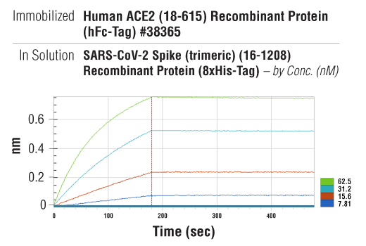 Image 2: SARS-CoV-2 Spike (trimeric) (16-1208) Recombinant Protein (8xHis-Tag)