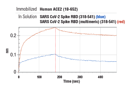 Image 2: SARS-CoV-2 Spike RBD (multimeric) (319-591) Recombinant Protein (8xHis-Tag)