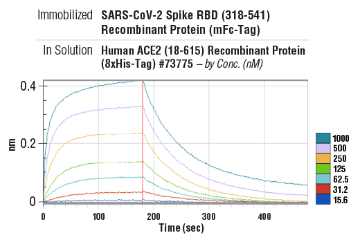 Image 1: SARS-CoV-2 Spike RBD (318-541) Recombinant Protein (mFc-Tag)