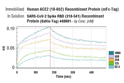 Image 2: Human ACE2 (18-652) Recombinant Protein (mFc-Tag)