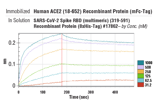Image 1: Human ACE2 (18-652) Recombinant Protein (mFc-Tag)