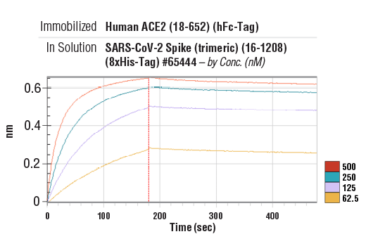 Image 5: Human ACE2 (18-652) Recombinant Protein (hFc-Tag)