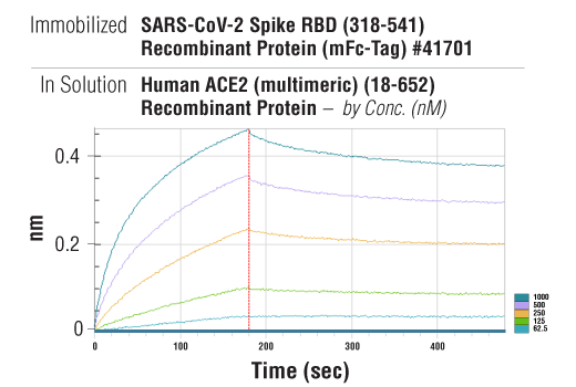Image 2: Human ACE2 (multimeric) (18-652) Recombinant Protein