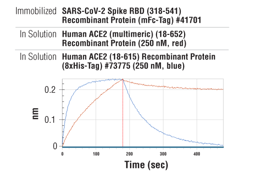 Image 3: Human ACE2 (multimeric) (18-652) Recombinant Protein