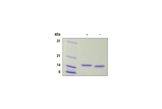 Image 2: Human IL-10 Recombinant Protein