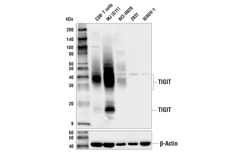 Image 65: Human Exhausted T Cell Antibody Sampler Kit