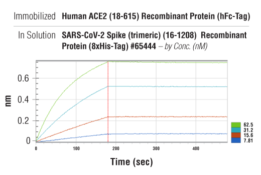 Image 2: Human ACE2 (18-615) Recombinant Protein (hFc-Tag)