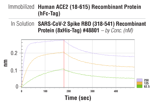Image 3: Human ACE2 (18-615) Recombinant Protein (hFc-Tag)