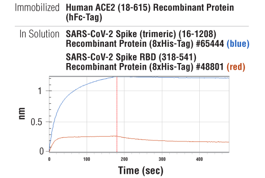 Image 4: Human ACE2 (18-615) Recombinant Protein (hFc-Tag)