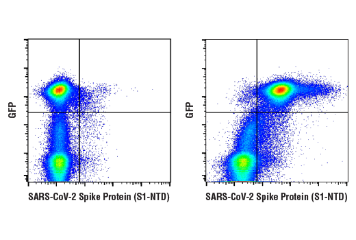Flow Cytometry Image 1: SARS-CoV-2 Spike Protein (S1-NTD) (E7M5X) Mouse mAb
