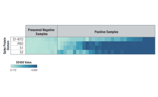 Image 9: SARS-CoV-2 Spike Protein Multi-Domain (S1-NTD, RBD, S1, S2) Serological IgG Sampler ELISA Kit