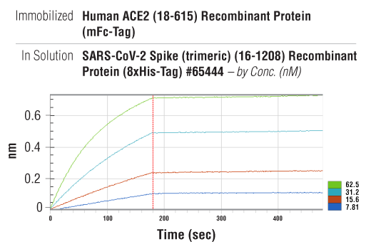 Image 2: Human ACE2 (18-615) Recombinant Protein (mFc-Tag)