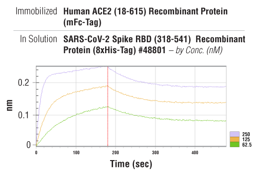 Image 3: Human ACE2 (18-615) Recombinant Protein (mFc-Tag)