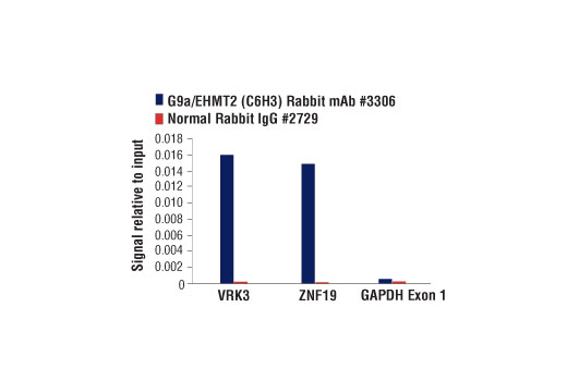 Chromatin Immunoprecipitation Image 1: G9a/EHMT2 (C6H3) Rabbit mAb