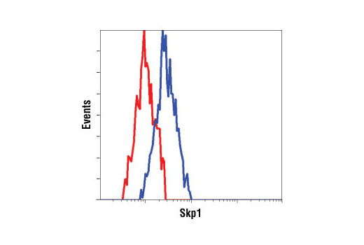 Flow cytometric analysis of NIH/3T3 cells using Skp1 antibody (blue) compared to a nonspecific negative control antibody (red).