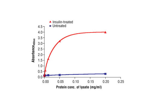 Figure 2. The relationship between the protein concentration of the lysate from untreated and insulin-treated CHO (IR/IRS-1) cells and the absorbance at 450 nm is shown.