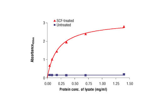 The relationship between protein concentration of lysates from untreated and SCF-treated H526 lysates and the absorbance at 450 nm is shown. Cells (0.5x10<sup>6</sup> cells/ml) were serum starved overnight and then treated with Human Stem Cell Factor (hSCF) #8925 (100 ng/ml) for 5 min at 37°C, and then lysed.