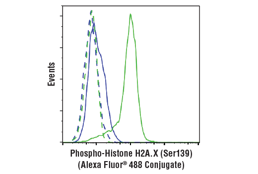 Flow cytometric analysis of HeLa cells, untreated (blue) or treated with with UV (100 mJ/cm2 with 3 hr recovery; green) using Phospho-Histone H2A.X (Ser139) (20E3) Rabbit mAb (Alexa Fluor® 488 Conjugate) (solid lines) or concentration-matched Rabbit (DA1E) mAb IgG XP® Isotype Control (Alexa Fluor® 488 Conjugate) #2975 (dashed lines).