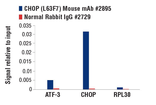 Chromatin immunoprecipitations were performed with cross-linked chromatin from MEF wild-type cells treated with tunicamycin (2ug/ml) overnight, and CHOP (L63F7) Mouse mAb #2895 or Normal Rabbit IgG #2729 using SimpleChIP® Enzymatic Chromatin IP Kit (Magnetic Beads) #9003. The enriched DNA was quantified by real-time PCR using SimpleChIP® Mouse ATF-3 Intron 1 Primers #13059, mouse CHOP promoter primers, and SimpleChIP® Mouse RPL30 Intron 2 Primers #7015. The amount of immunoprecipitated DNA in each sample is represented as signal relative to the total amount of input chromatin, which is equivalent to one.