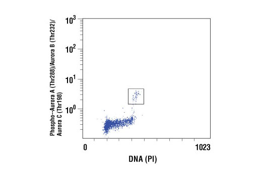 Flow cytometric analysis of untreated Jurkat cells using Phospho-Aurora A (Thr288)/Aurora B (Thr232)/Aurora C (Thr198) (D13A11) XP<sup>®</sup> Rabbit mAb compared to propidium iodide (DNA content). The boxed population indicates phospho-Aurora A (Thr288)/Aurora B (Thr232)/Aurora C (Thr198)-positive cells.