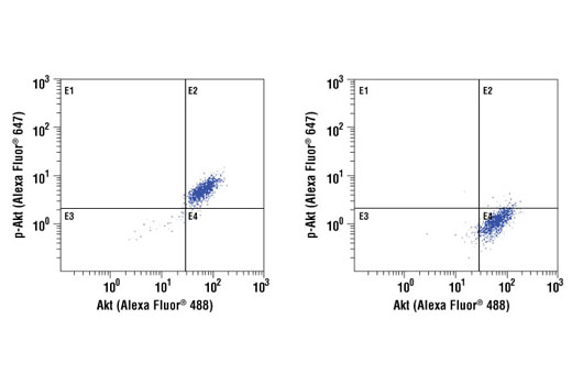 Flow cytometric analysis of Jurkat cells, untreated (left) or or treated with LY294002, wortmannin and U0126 (right), using Akt (5G3) Mouse mAb (Alexa Fluor<sup>®</sup> 488 Conjugate) and Phospho-Akt (Ser473) (D9E) Rabbit mAb (Alexa Fluor<sup>®</sup> 647Conjugate) #4075.