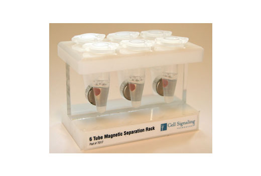 Miscellaneous - 6-Tube Magnetic Separation Rack - Chromatin IP, Immunoprecipitation - 1 units #7017, Magnetic Separation Rack